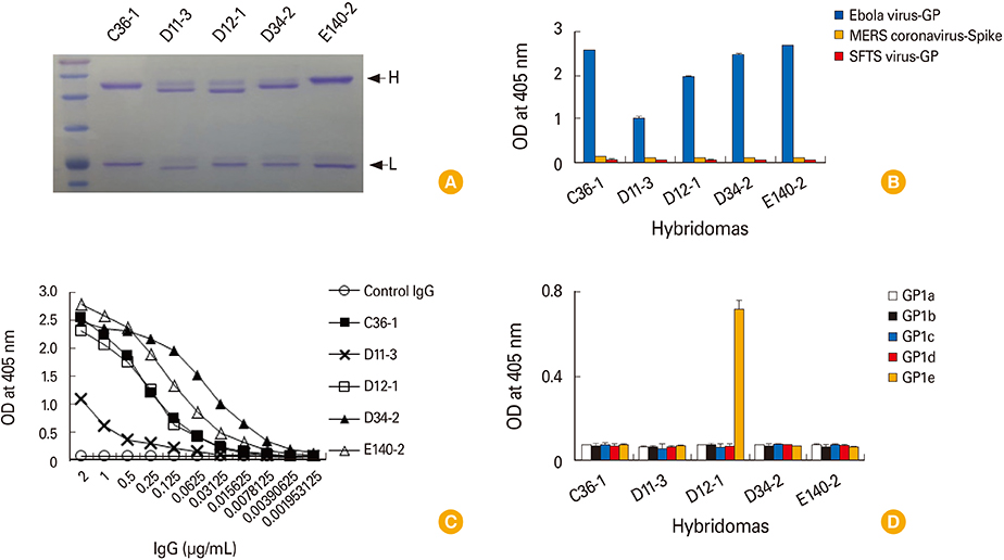 2 Purification Of The IgG Antibodies From Five Hybridoma Clones And Evaluation Their Ag Specific Binding Activity A Hybridomas D36